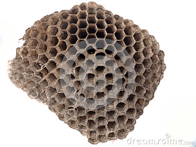 Paper wasp nest over white
