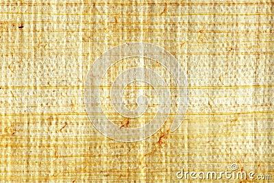 Papyrus closeup