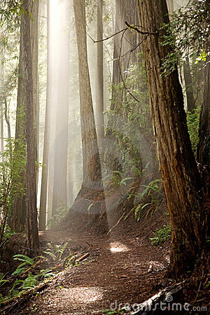 Par les arbres