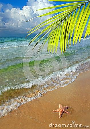 Paraíso com palmeira