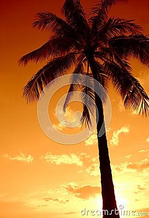 Paraíso de la palmera de la puesta del sol