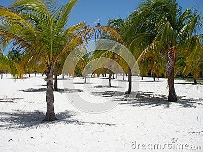 Paraíso do Palm Beach