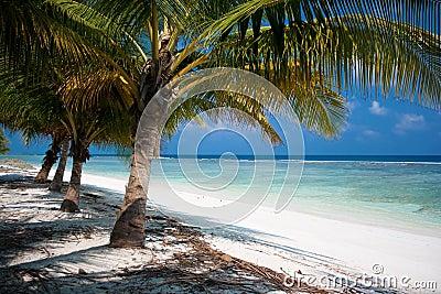 Paraíso tropical de la isla