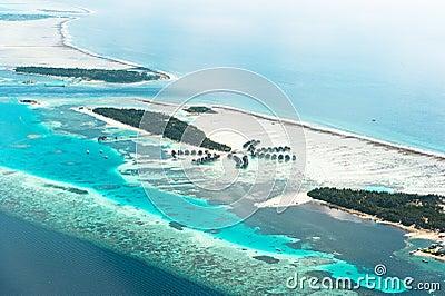 Paradies-Palmen-Insel