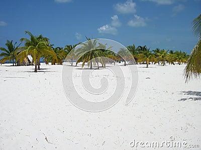 Palm Forest Beach Paradise 2