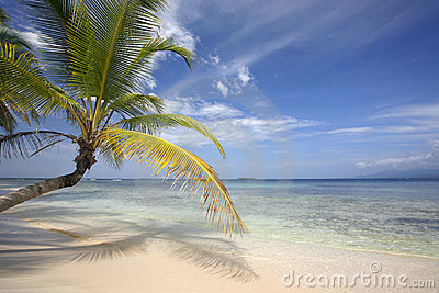 Paradis de cocotier de plage