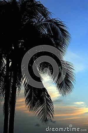 Paradise 03