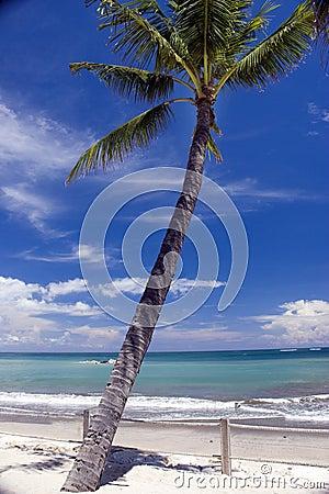 Paradise beach palm