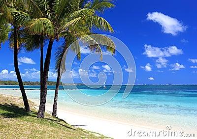 Paradise beach in tropical island