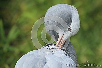 Paradise crane
