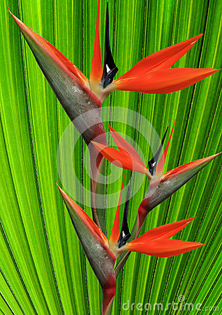 Paradise Flower Stock Images - Image: 25685184