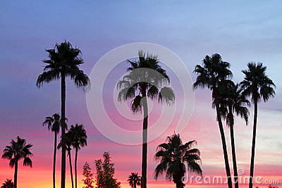 Paradise Palm Tree Sunset Sky