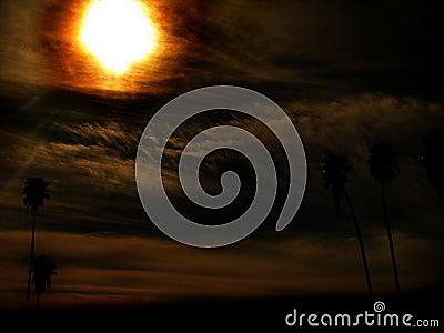 Paradise Sun Burn
