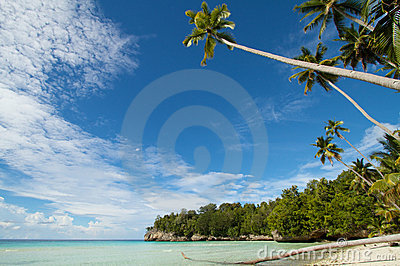 Paradise white sand tropical island beach