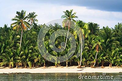 Paradiso tropicale della palma