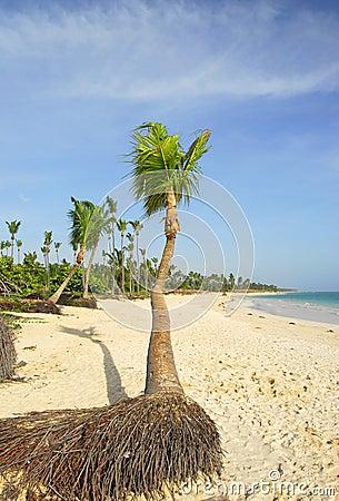 Paradiziacas beaches