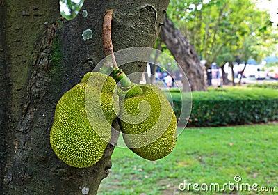 The Paramita on tree