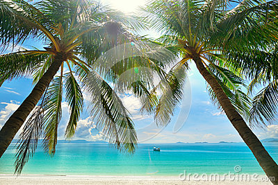 Paraíso da ilha - palmeiras que penduram sobre uma praia branca arenosa