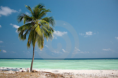 Paraíso de la isla - palmera