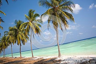 Paraíso de la isla - palmeras