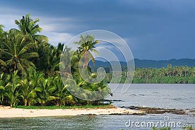 Paraíso tropical da palmeira