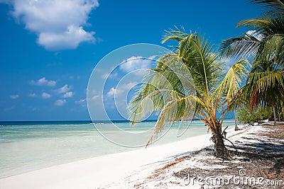 Paraíso tropical do console