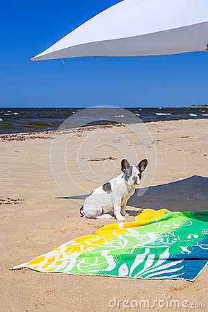 Parasol and dog on the beach of Baltic Sea