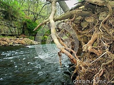 Parc d état de canyon de rivière d Apple l Illinois