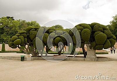 Parco del Retiro (Madrid)