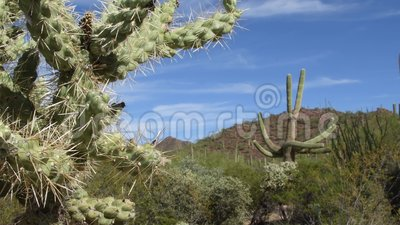 Parco nazionale del saguaro video d archivio