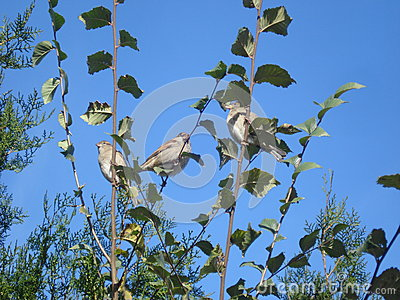 Resultado de imagem para uma árvore com pardais