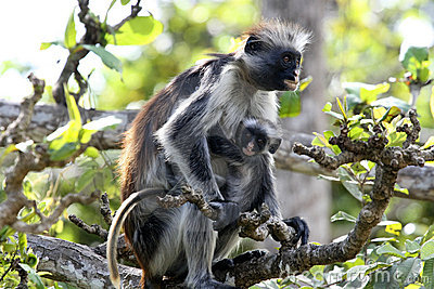 Parent and kid of monkey