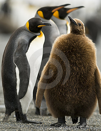 Parenting Penguin