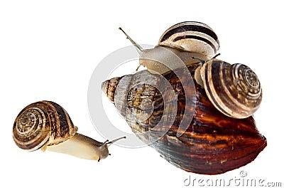 Parenting snail