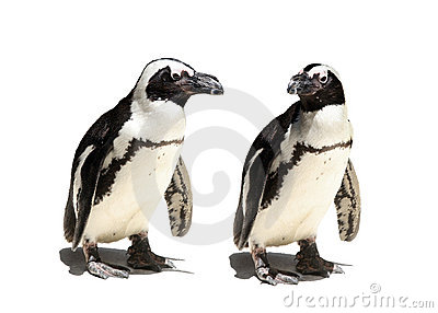 Pares do pinguim
