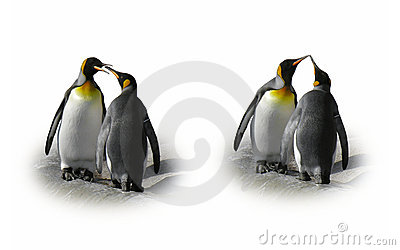 Pares do pinguim no amor - flerte, beije, isolado
