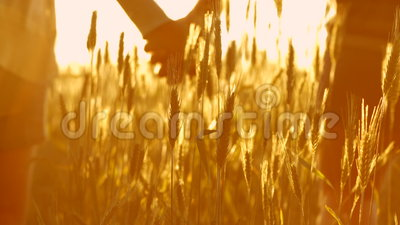 Pares en amor en la puesta del sol en trigo