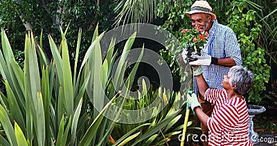 Pares mayores que miran la planta de tiesto de florecimiento metrajes