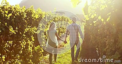 Pares que andam em conjunto entre a vinha
