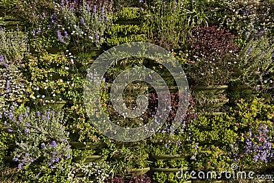 una parete verde anche conosciuta come un giardino verticale o parete ...