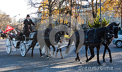 Paris horse parade Editorial Image