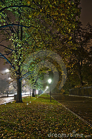 Park alley at night