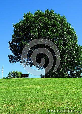 Park bench under green tree