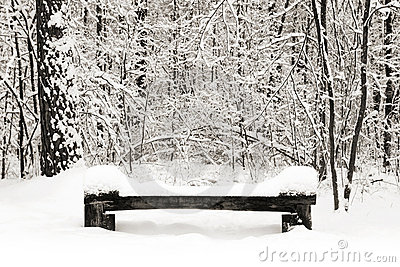 Park bench at winter