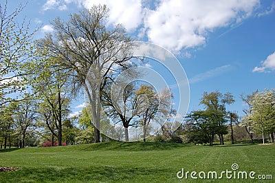 Park With Blue Sky