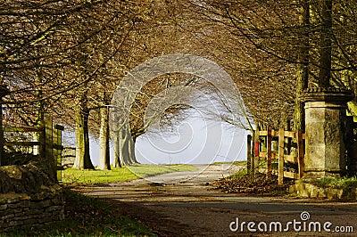 Park entry gate