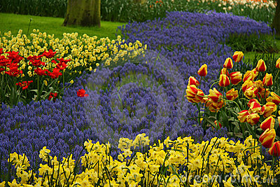 Park of flowers
