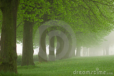 Park in the fog
