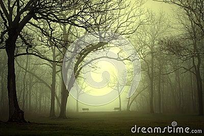 Park in Fog