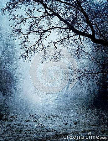 Park in a fog